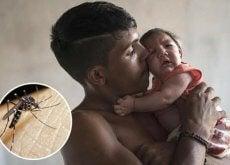 zika-virusu