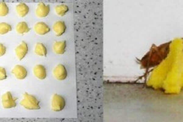 borik-asit-yumurta