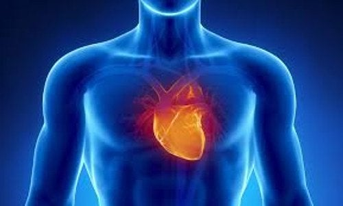 kalp ve insan bedeni