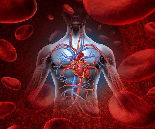 kalp ve damarlar