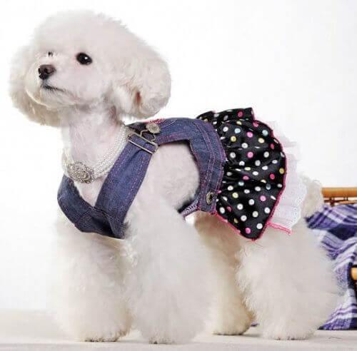 köpeklere kıyafet
