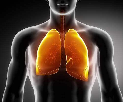 akciğer şeması