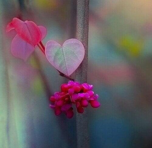 çiçek yaprakları