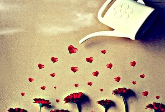kalp ile sulanan çiçekler