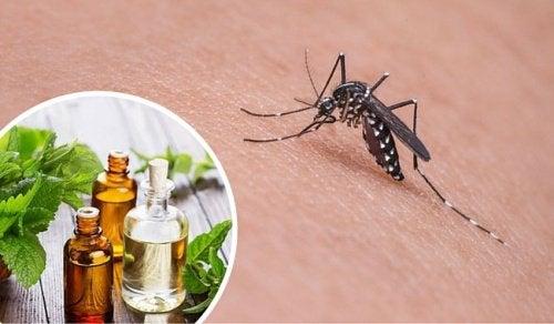 sivrisinek kovucu yağ