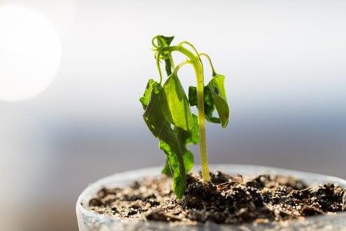 bitki filizi