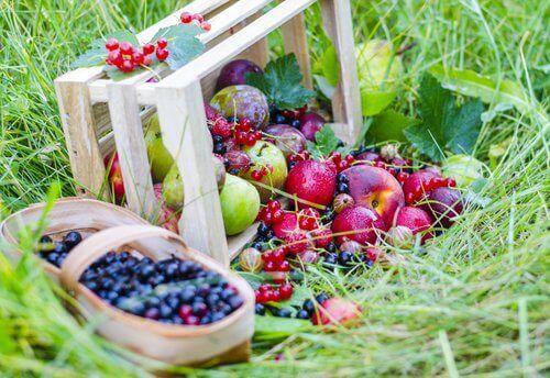 elma ve böğürtlen