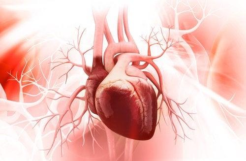 Kalp Sağlığı için Yapabileceğiniz 3 Şey