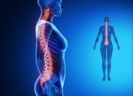 omurga şeması