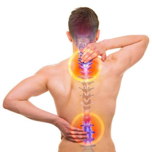 bel ağrısı ve omurga