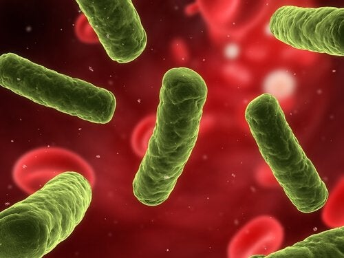 bağışıklık sistemi