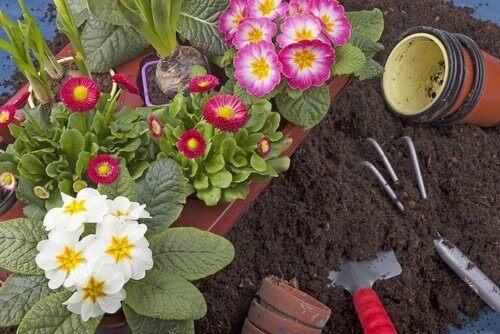 bahçede çiçekler