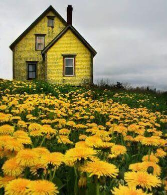 sarı ev ve çiçekler