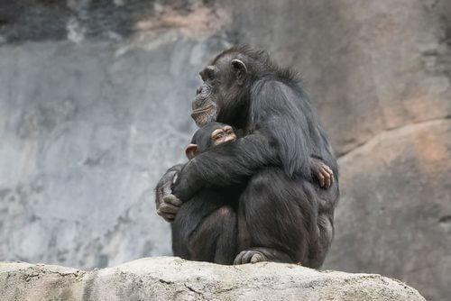 annesine sarılan maymun