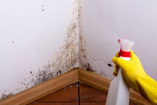 duvar kenarlarını temizlemek