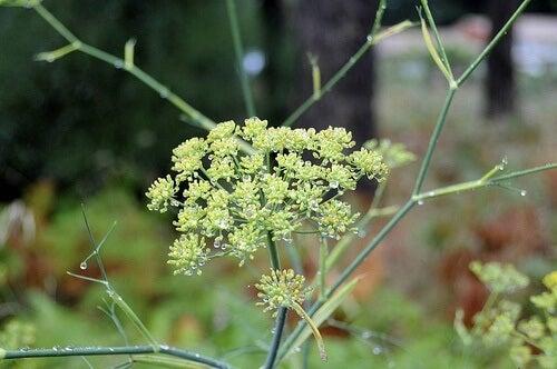 idrar kaçırmayı engelleyici bitkiler