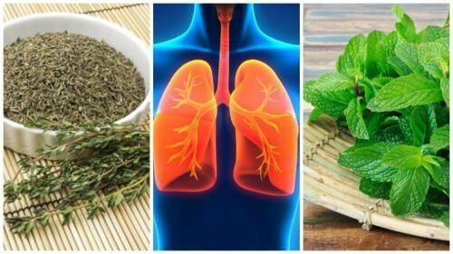 Akciğer Sağlığını Korumak İçin 8 Bitki