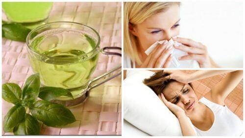 Her Gün Fesleğen Çayı İçmenin 8 Faydası