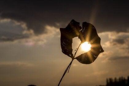 gün batımı ve kalp yaprak