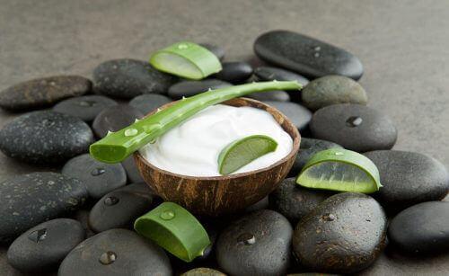 aloe vera doğal krem yapımında kullanılır
