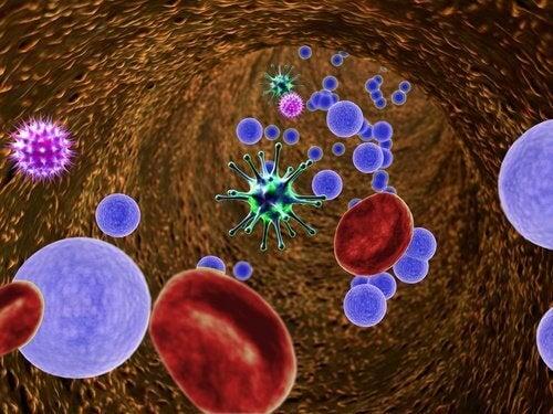bağışıklık sistemini etkileyen bakteriler