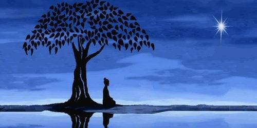 ağacın altında gece meditasyonu
