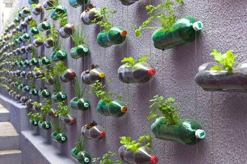 pet şişeden duvar saksıları