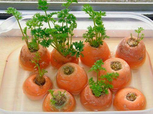 evde tekrar yetiştirebileceğiniz sebzeler