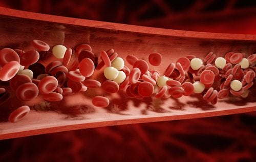 kan damarda nasıl dolaşır?