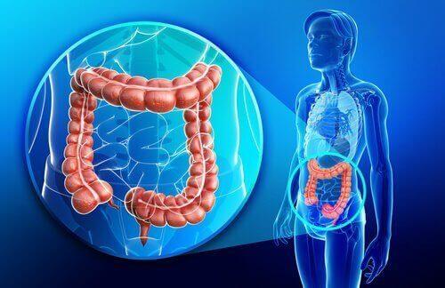Crohn Hastalığı ile İlgili Bilmeniz Gerekenler