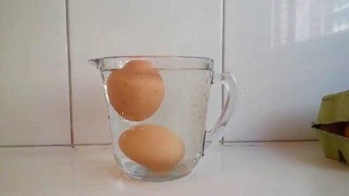 yumurtayı suya koyun