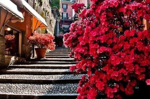şehrin içinde taş merdivenler