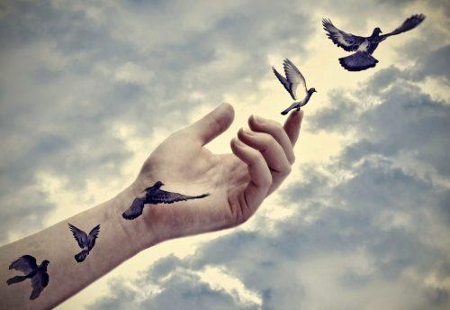 kuşlar ve el