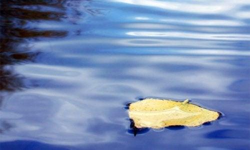 suda yaprak ve sessizlik