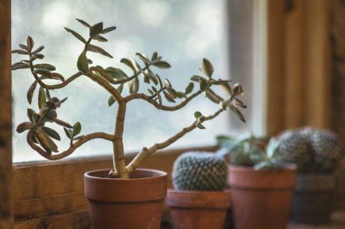 Evde Bitki Olmasının 7 Faydası