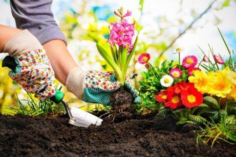 gübreli toprağa çiçek ekimi