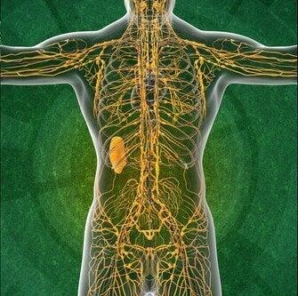 Lenfatik Sistem: Bilmek İsteyeceğiniz 4 İlginç Gerçek