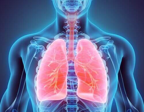 Sigarayı Bırakmak ve Akciğeri Temizlemek için İpuçları
