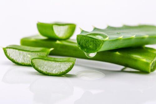sağlıklı saçlar için aloe vera yaprağı