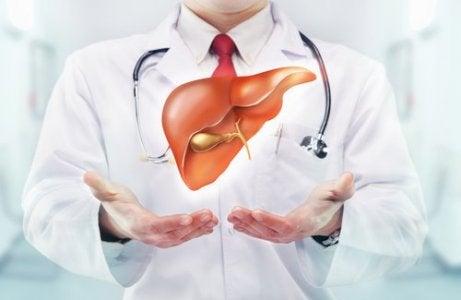 elinde karaciğer tutan doktor