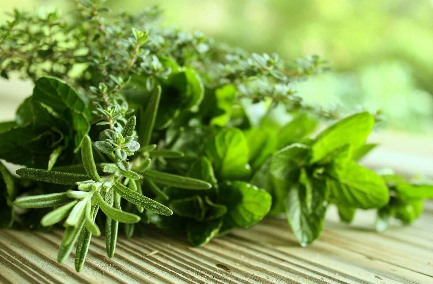 şifalı yeşil bitkiler