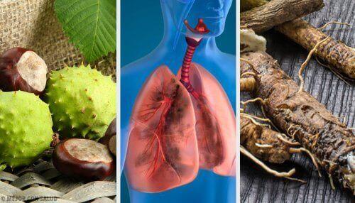Daha İyi Nefes Almak ve Akciğerinizi Güçlendirmek İçin Bu 4 Ev Yapımı Reçeteyi Deneyin