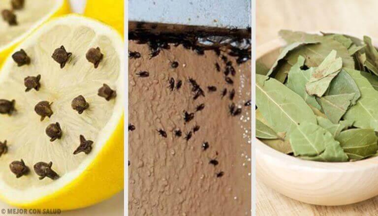 Sinir Bozucu Böceklerden Doğal Olarak Kurtulmak