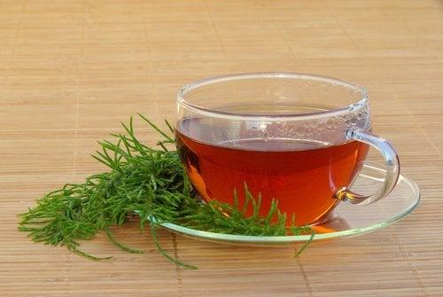 bir fincan atkuyruğu çayı ve bitkisi