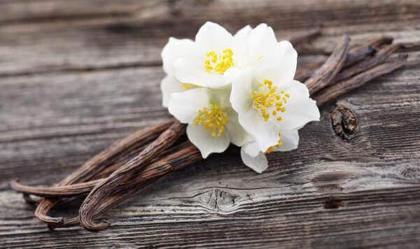 vanilya çiçeği