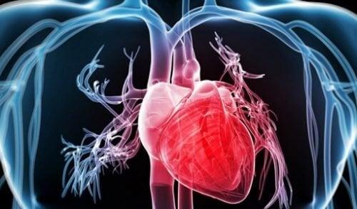brokoli ve kalp sağlığı