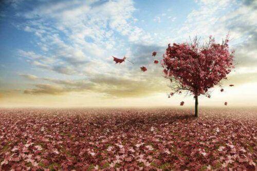 sonbahar ve kalp resmi