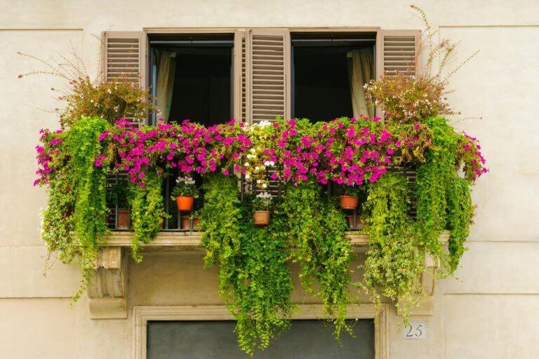 Evinize Renk Katacak 14 Mini Balkon Bahçesi