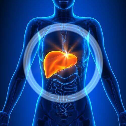 insan iç organlar