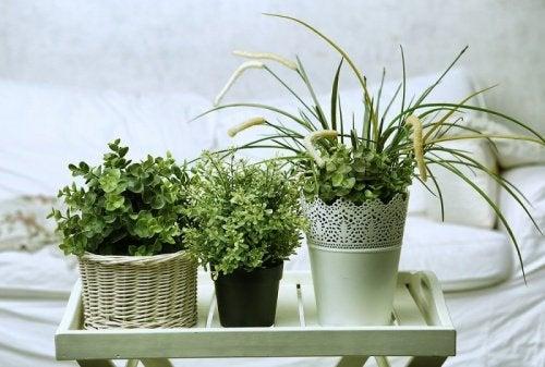odanız için bitki